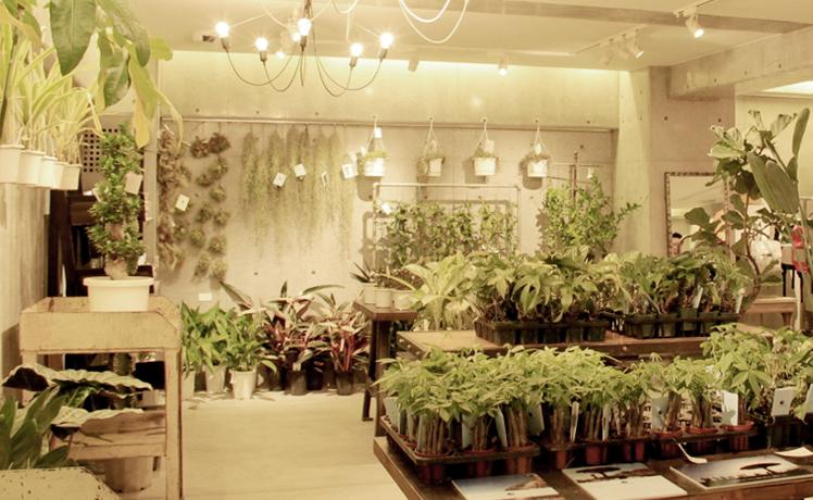 植物を信じる人達